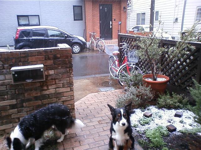 このくらいの雪降り